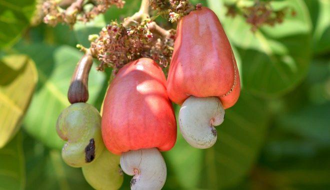 Raw cream from cashews