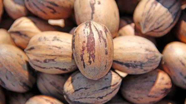 Nuts – Pecan